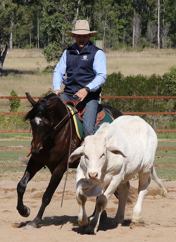 Guy McLean and Faith, his steer
