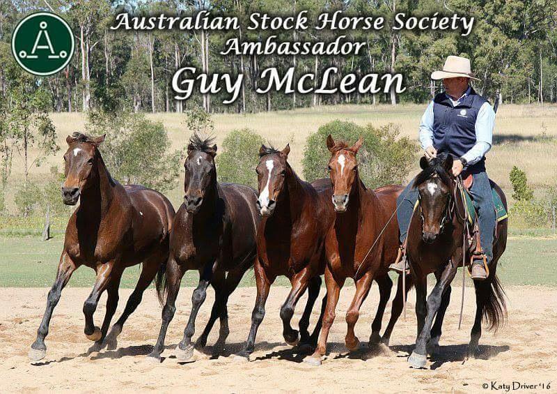 Guy McLean Australian Stock Horses Ambassador
